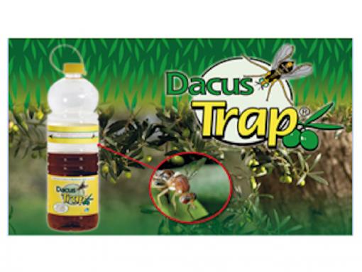 Dacus Trap esca in bottiglia per la mosca dell'olivo