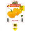 Peperoncino Jamaican Scoth Bonnet - vaso 14