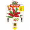 Peperoncino Jalapeno - vaso 14