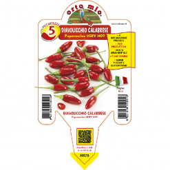 Peperoncino Diavolicchio Calabrese - vaso 14