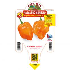 Peperoncino Habanero arancio - vaso 14