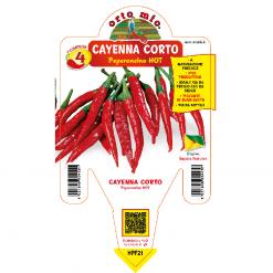 Peperoncino Cayenna corto - vaso 14