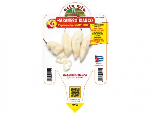 Peperoncino Habanero bianco - vaso 14