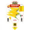 Peperoncino Cedrino - vaso 14