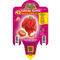 Peperoncino Carolina Reaper - vaso 14