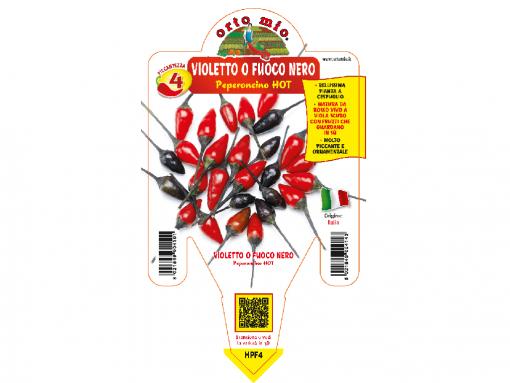 Peperoncino Violetto o Fuoco Nero - vaso 14