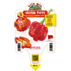 Peperoncino Seven Pots - vaso 14
