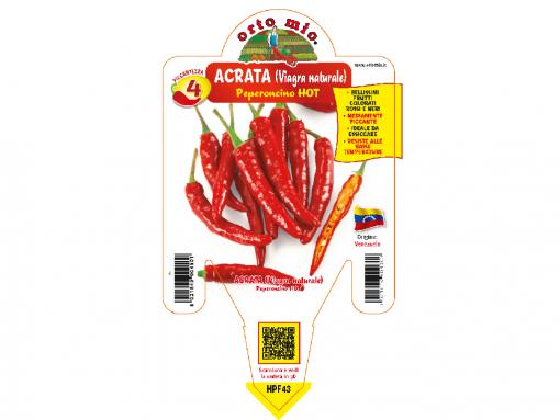 Peperoncino Acrata - vaso 14