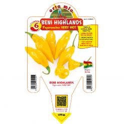 Peperoncino Beni Highlands - vaso 14