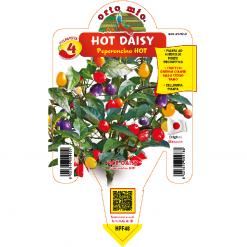 Peperoncino Hot Daisy Cap 1546 - vaso 14