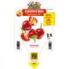 Peperoncino Cuoricino - vaso 14