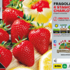 Piantine in pack Fragola rifiorente Charlotte