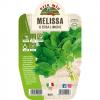 Pianta in vaso Melissa - Aromatiche MasterChef