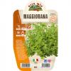 Pianta in vaso Maggiorana - Aromatiche MasterChef
