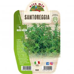 Pianta in vaso Santoreggia montana - Aromatiche MasterChef