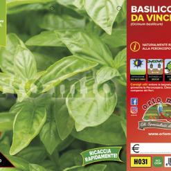 Piantine in pack Basilico varietà Da Vinci - Aromatiche MasterChef