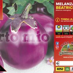 Piantine in pack Melanzana tonda lilla variet? Beatrice F1