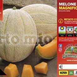 Piantine in pack Melone retato con fetta varietà Magnificenza F1