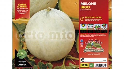 Piantine in pack Melone liscio variet? Iago F1