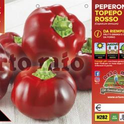 Piantine in pack Peperone da riempire Topepo varietà Indus F1