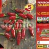 Piantine in pack Peperone piccante calabrese diavolicchio varietà Italico F1
