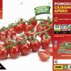 Piantine in pack Pomodoro ciliegino variet? Apero F1
