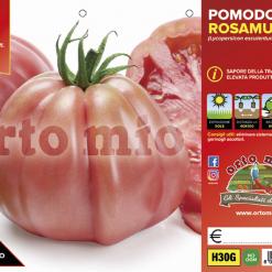 Piantine in pack Pomodoro cuore ligure rosa varietà Rosamunda F1