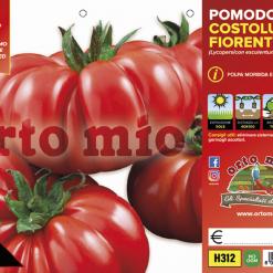Piantine in pack Pomodoro costoluto Fiorenino varietà Successo F1