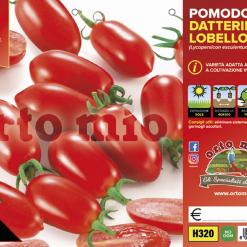 Piantine in pack Pomodoro Datterino varietà Lobello F1