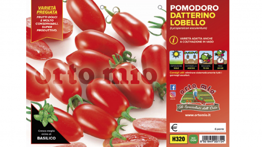 Piantine in pack Pomodoro Datterino variet? Lobello F1