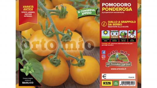 Piantine in pack Pomodoro da appendere variet? Ponderosa giallo Umbro