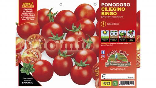 Piantine in pack Pomodoro ciliegia tipo Pachino varietà Bingo F1
