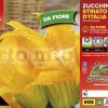 Piantine in pack Zucchino da fiore varietà Striato d'Italia F1