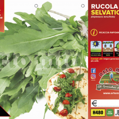 Piantine in pack Rucola Selvatica