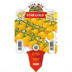 Piantina in vaso 10 Pomodoro Ciliegino giallo varietà Star Gold