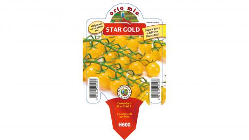 Piantina in vaso 10 Pomodoro Ciliegino giallo variet? Star Gold