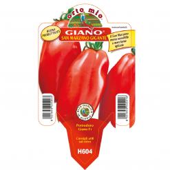 Piantina in vaso 10 Pomodoro S.Marzano gigante varietà Giano F1