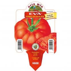 Piantina in vaso 10 Pomodoro tondo da insalata varietà Eva F1