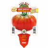 Piantina in vaso 10 Pomodoro gigante variet? Big Beef F1