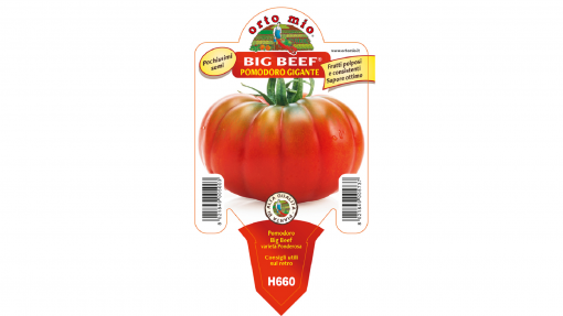 Piantina in vaso 10 Pomodoro gigante varietà Big Beef F1