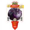 Piantina in vaso 10 Melanzana tonda violetta Sabelle F1
