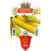 Piantina in vaso 10 di Zucchino giallo variet? Golden Glory F1