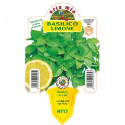 Piantina in vaso 10 Basilico Limone - Aromatiche MasterChef