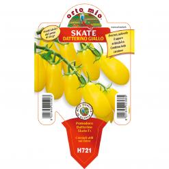 Piantina in vaso 10 Pomodoro Datterino giallo variet? Skate F1