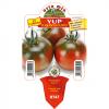 Piantina in vaso 10 di Pomodoro tipo Camone Sardo Quinto Gusto varietà Yup F1