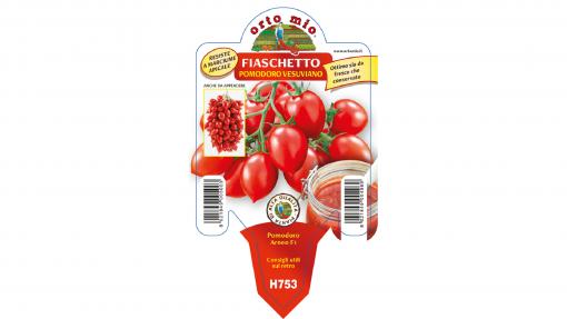 Piantine in vaso 10 Pomodoro Fiaschetto tipo Piennolo del Vesuvio variet? Arneo F1