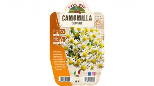 Camomilla comune in vaso 14 - Aromatiche MasterChef