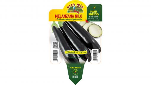 Piantina in vaso 14 Melanzana innestata lunga nera varietà Nilo F1