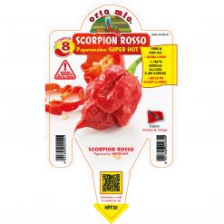Peperoncino Scorpion rosso - vaso 10