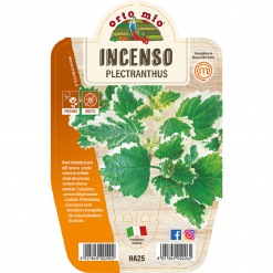 Incenso in vaso 14 - Aromatiche MasterChef